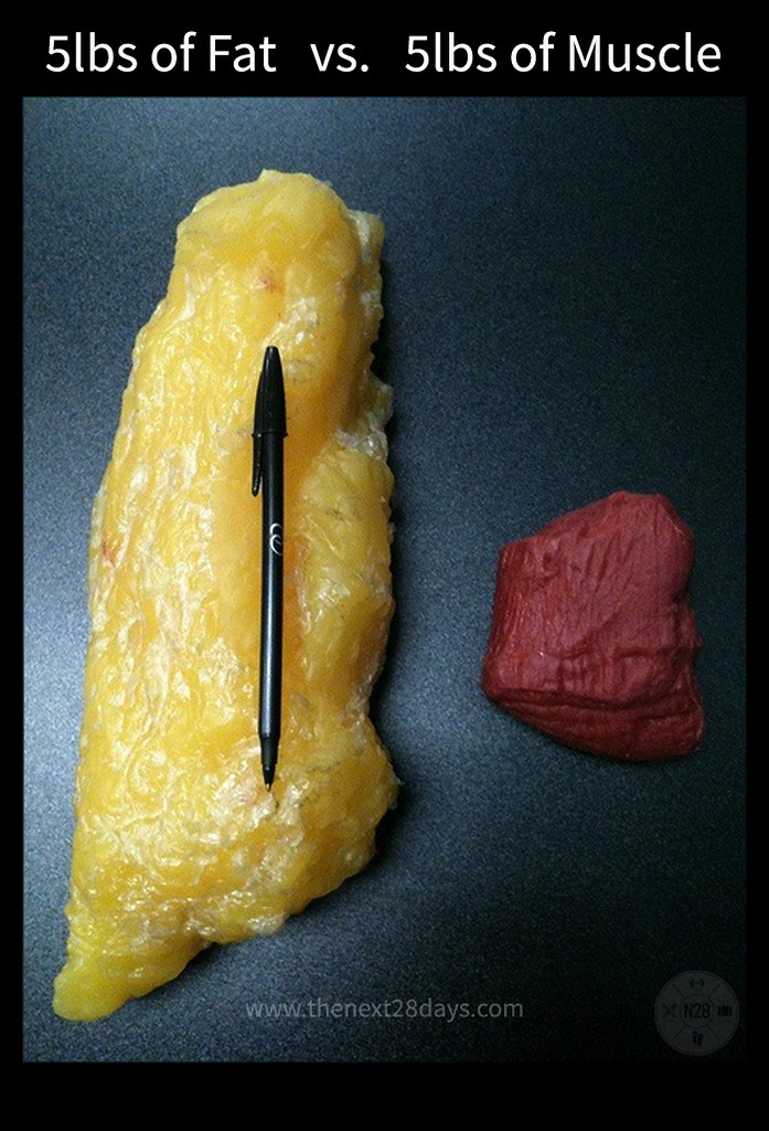 fat-vs-muscle